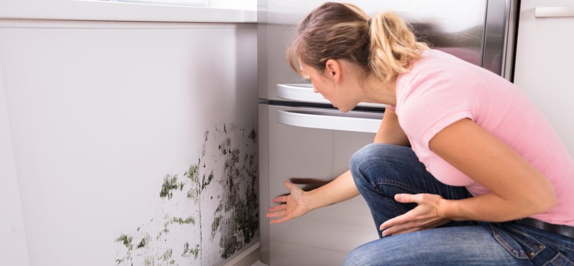 We Can Help Remove Mold In Colorado Springs