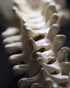 spine-240x300