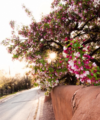 Springtime in New Mexico; Oh how we've missed you.