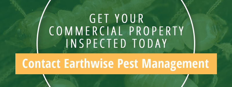 Commercial Property Pest Management