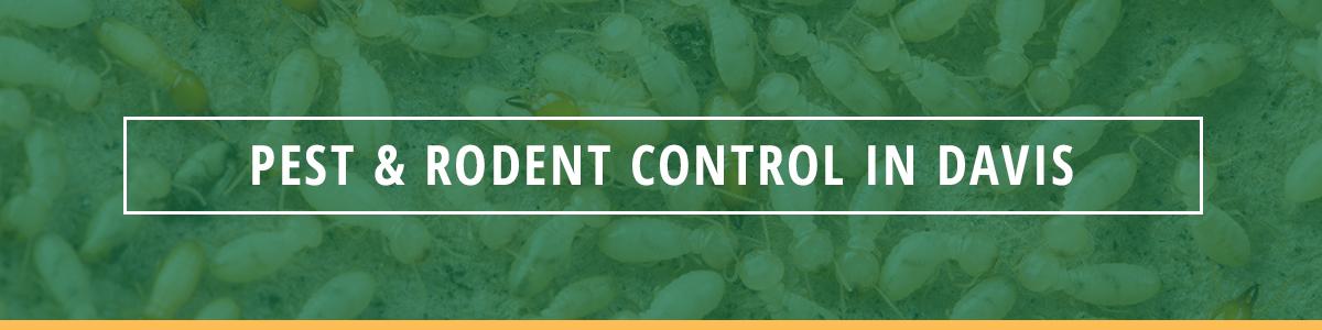 pest and rodent control davis california