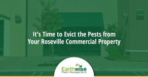 Evict the Pests Roseville