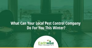 pest control this winter