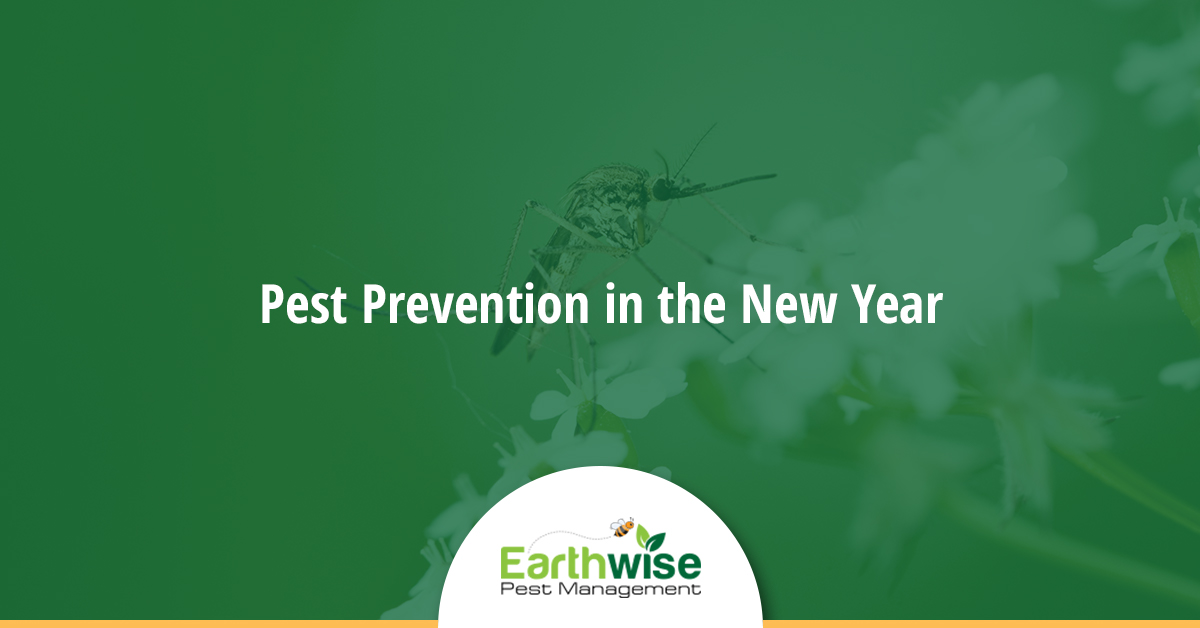 Pest Prevention New Year