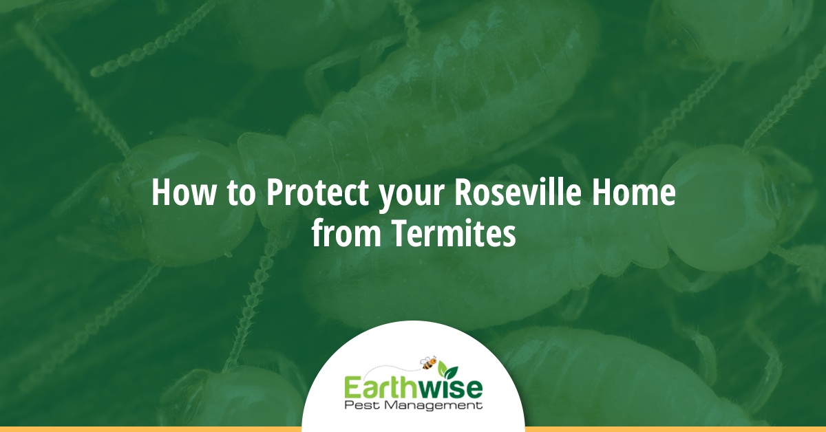 Protect your Roseville Home from Termites