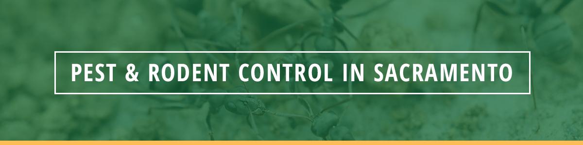 pest and rodent control sacramento california