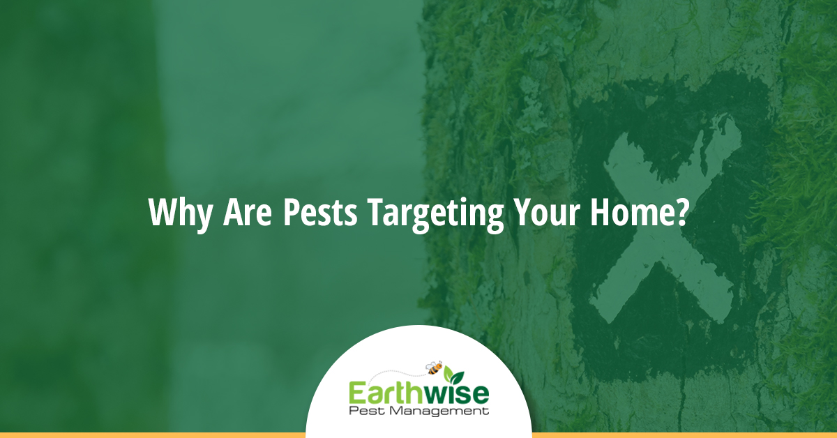 Why Are Pests Targeting Your Home