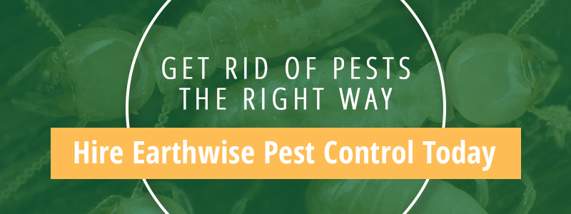earthwise pest control
