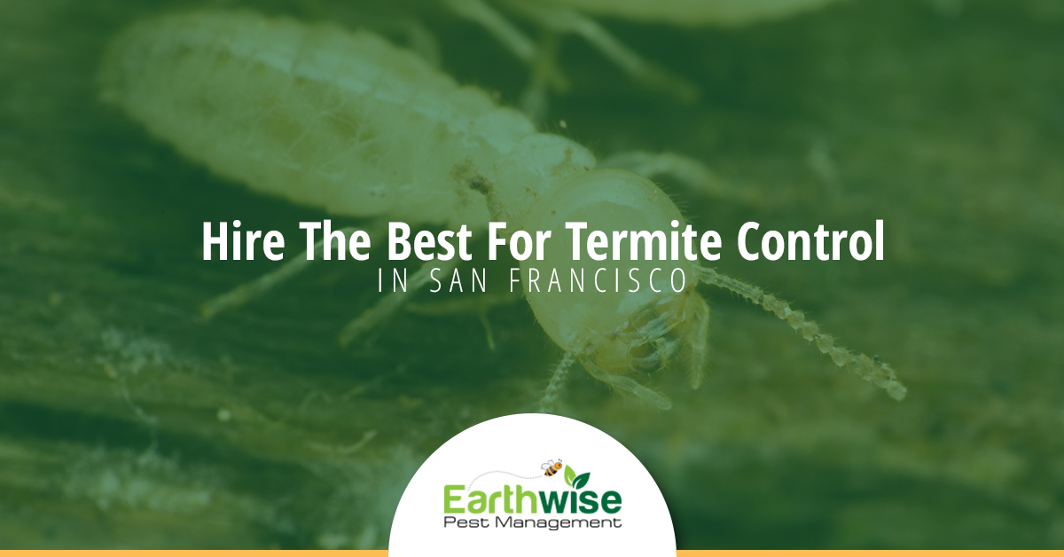 Hire the best for termite control in san francisco