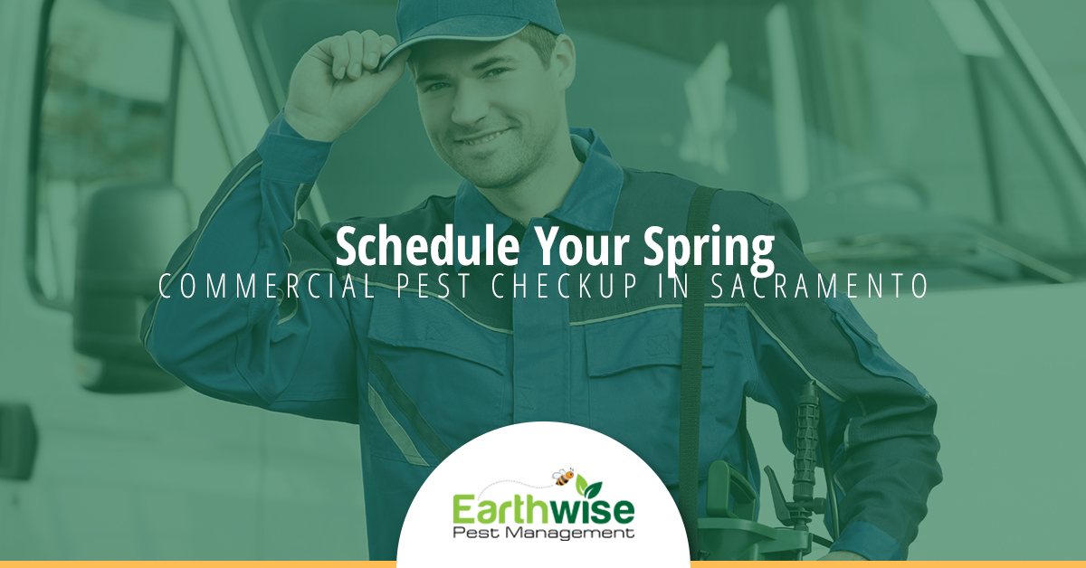 Schedule Your spring commercial pest checkup in sacramento