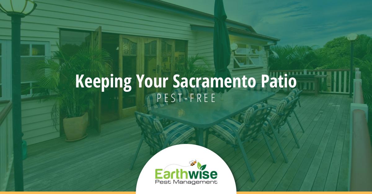 Keeping Your Sacramento Patio Pest Free
