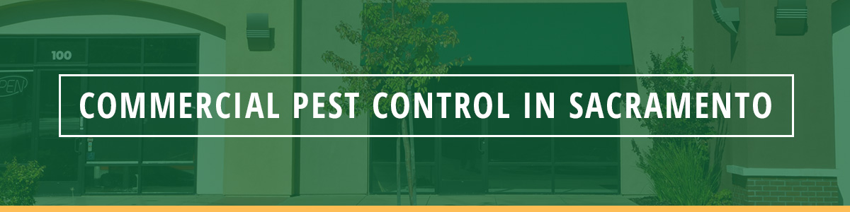 Commercial Pest Control in Sacramento