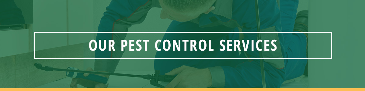 Our Pest Control Services