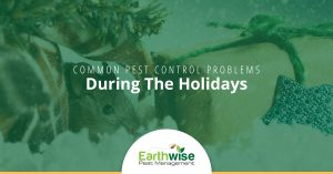 Common Pest Problems During the Holidays