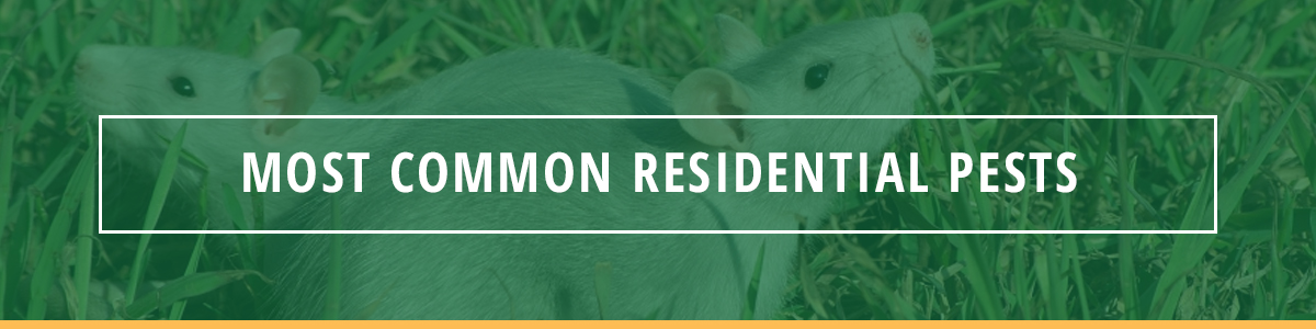 Most Common Residential Pests