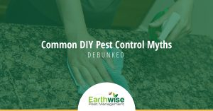 Common DIY Pest Control Myths Debunked