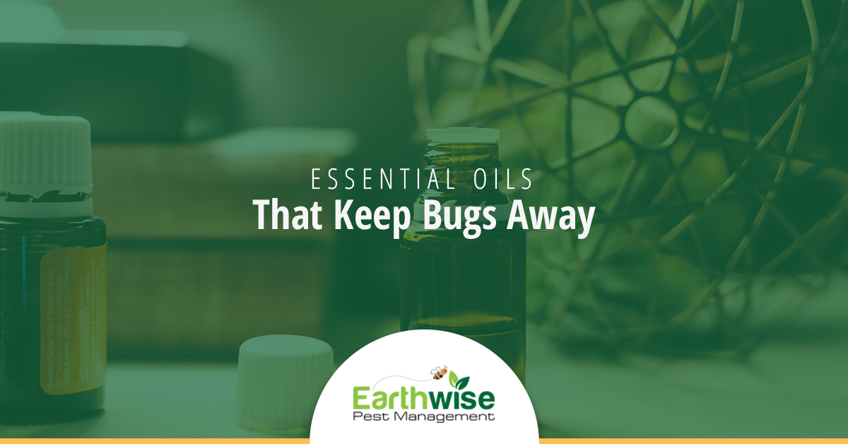Essential Oils That Keep Bugs Away
