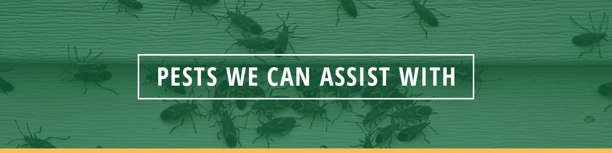 pests we can assist with