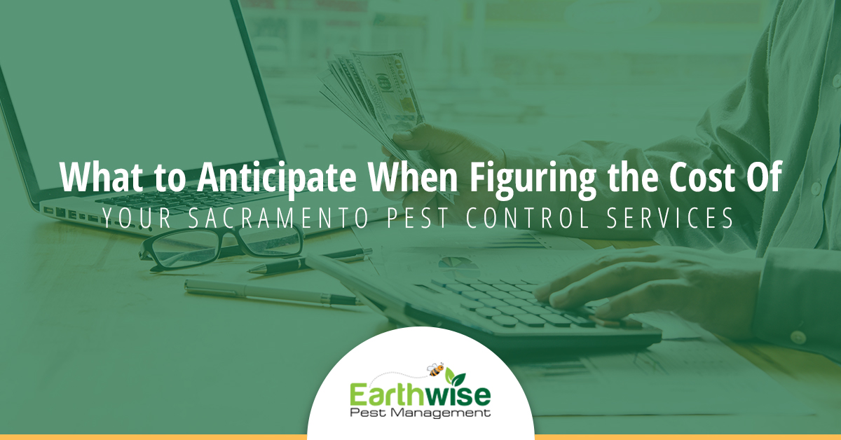 What to Anticipate When Figuring the Cost of Your Sacramento Pest Control Services