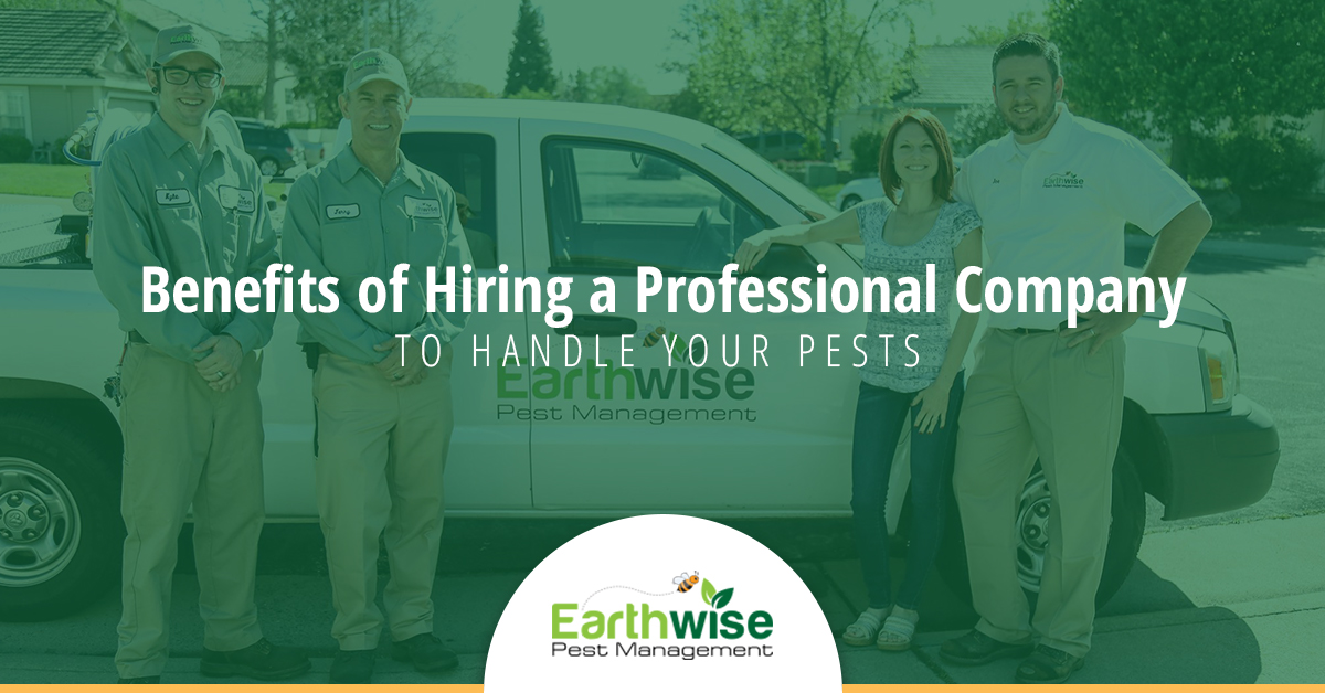 Benefits of Hiring a Professional Company to Handle Your Pests
