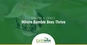 Create a Space Where Bumble Bees Thrive