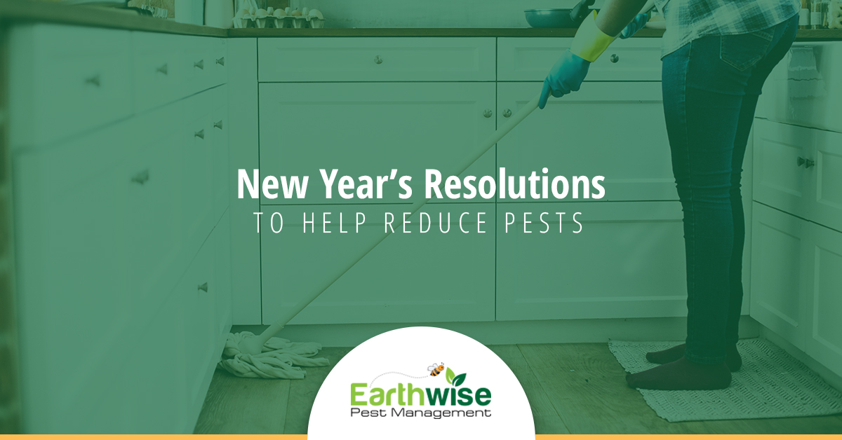 New Years Resolutions to Help Reduce Pests