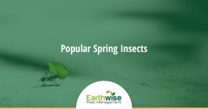 Popular Spring Insects