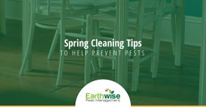 Spring Cleaning Tips To Prevent Pests