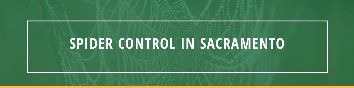 Spider Control in Sacramento
