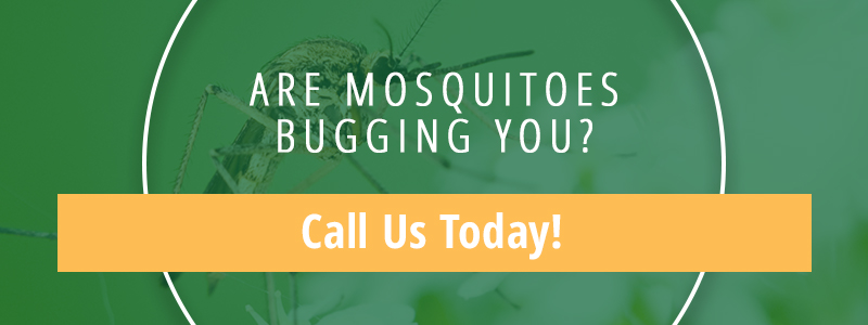 Are Mosquitoes Bugging You