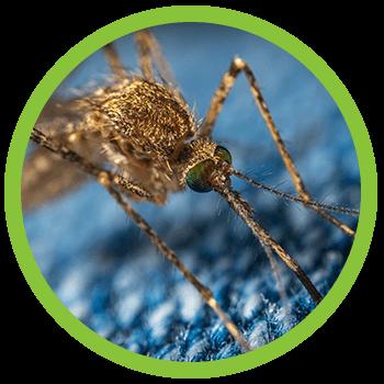 mosquito control sacramento