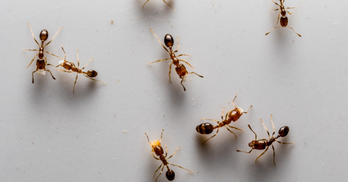 Pest Control Sacramento 5 Ways To Prevent An Ant Infestation
