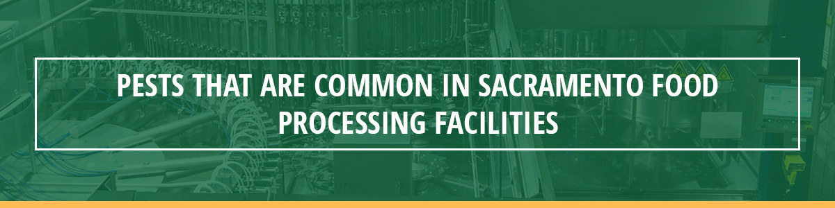 Pests That Are Common in Sacramento Food Processing Facilities