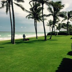 Pest Control Palm Beach