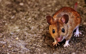 Rodent Control West Palm Beach