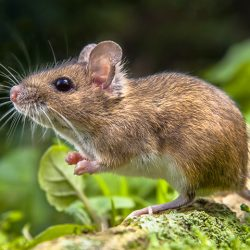 Rodent Extermination West Palm Beach