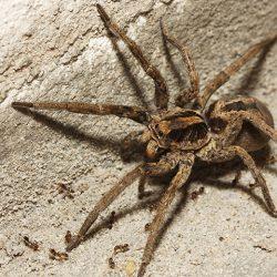 Spider Control Delray Beach