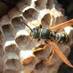 Wasps Delray Beach