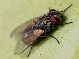 Fly Bait