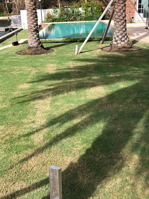 Lawn Scalping Palm Beach