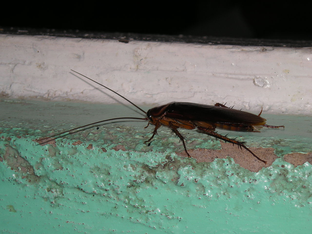 Palmetto Bugs West Palm Beach