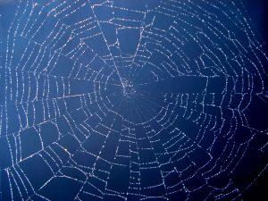 Spider Webs On Home