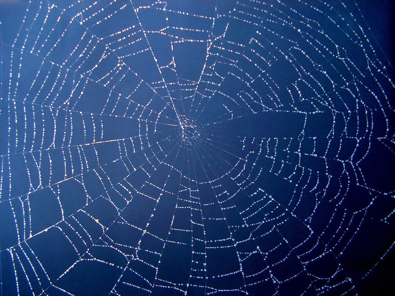 Spider Webs On Home