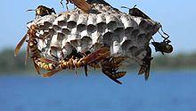Exterminator Boynton Beach