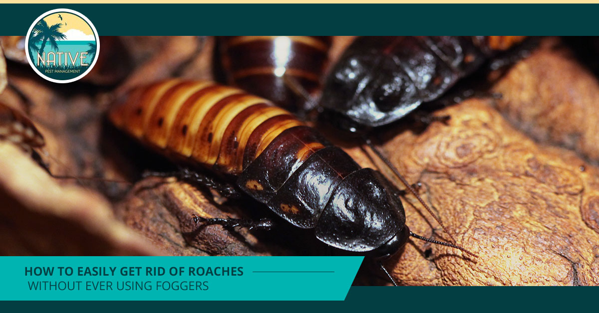 How To Easily Get Rid Of Roaches Without Ever Using Foggers