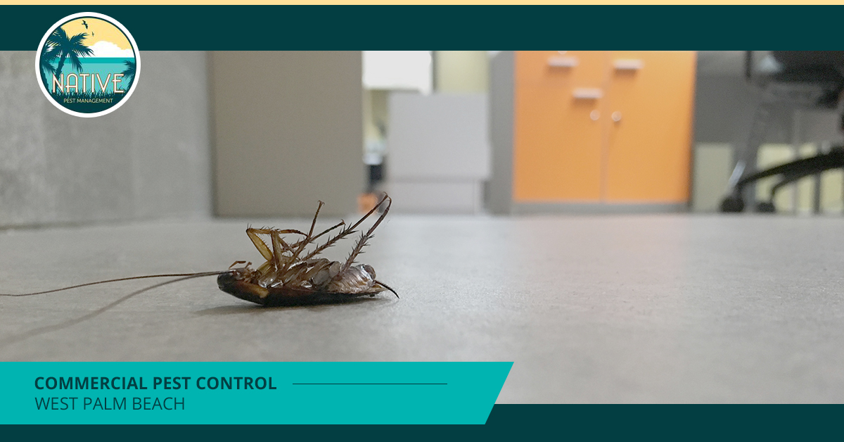 Commercial Pest Control West Palm Beach