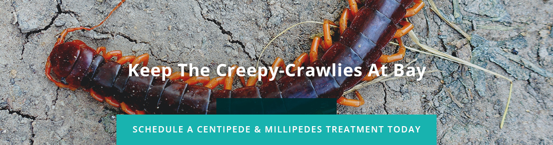 Keep The Creepy-Crawlies At Bay