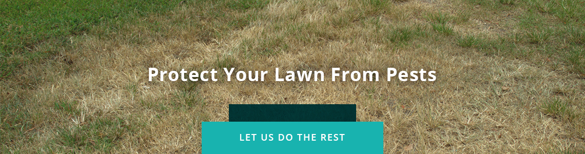 Protect Your Lawn From Pests