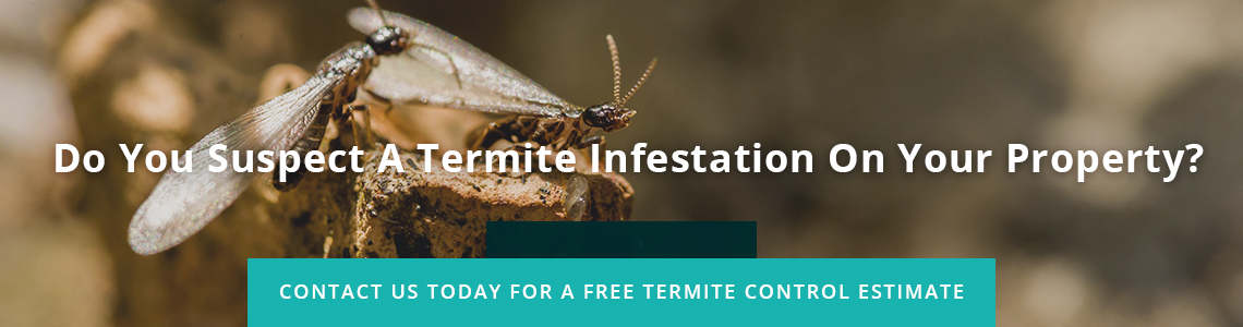 West Palm Beach Termite Control
