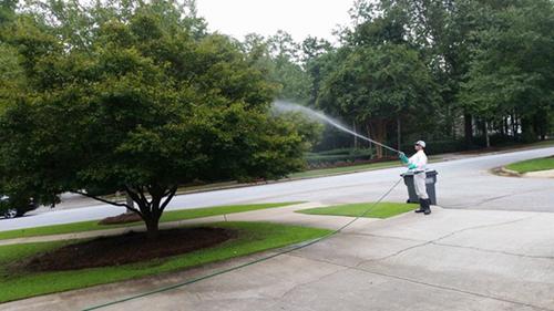 tree-spraying-sm